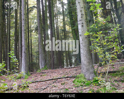 view in the forest in southern Germany Swabian Franconian forest - Stock Photo