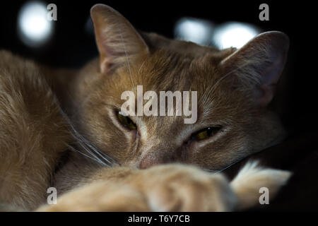 Cat Resting on a couch - Stock Photo