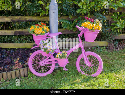 Roadside bicycle painted pink with flower display of Yellow Red and Blue primulas on it. Elswick Best Kept village Lancashire England UK - Stock Photo