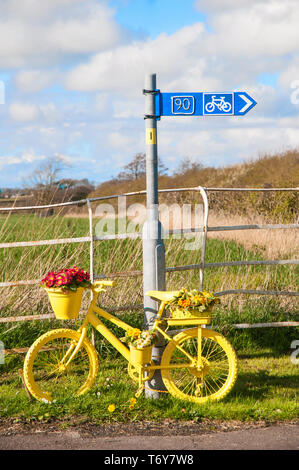 Roadside bicycle painted yellow with flower display of Yellow and Red primulas on it. Elswick Best Kept village Lancashire England UK - Stock Photo