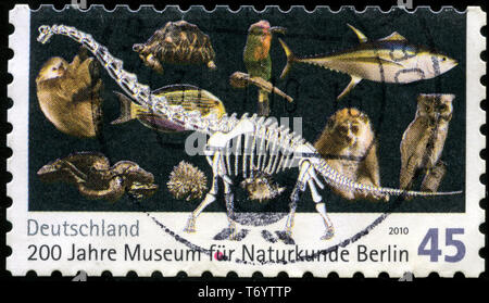 Postage stamp from the Federal Republic of Germany in the Bicentenary of Natural History Museum, Berlin series issued in 2010 - Stock Photo