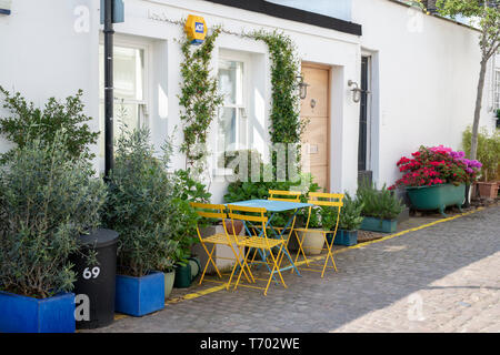 House with small trees and shrubs in containers  in Queens Gate Mews, South Kensington, London, England - Stock Photo