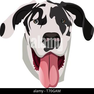 Great Dane illustration vector on white background - Stock Photo