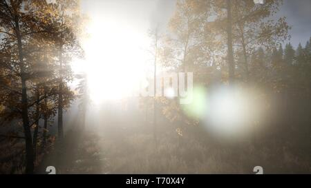 Sun Shining Through Pine Trees in Mountain Forest - Stock Photo