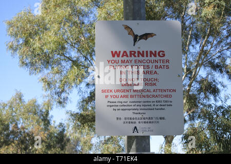Flying Foxes Bats Warning sign.Around 10 thousand Flying-foxes established their first permanent camp in Adelaide in 2010 that - Stock Photo