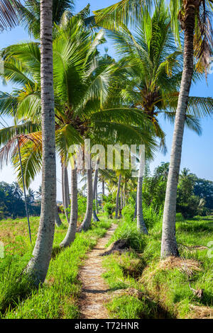 Palm trees with a path in Bali Indonesia - Stock Photo