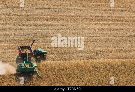 A combine harvester unloads soybeans into a grain wagon on the go during the harvest, near St. Adolphe; Manitoba, Canada - Stock Photo