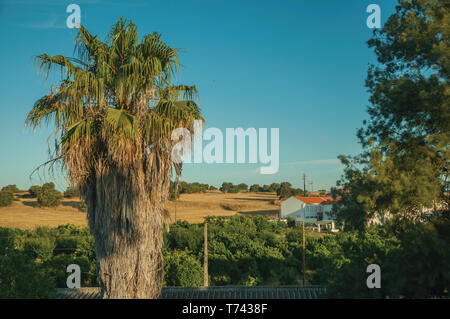 Countryside landscape with palm tree and cottage at sunrise, on a farmstead near Elvas. A gracious city on the easternmost frontier of Portugal. - Stock Photo