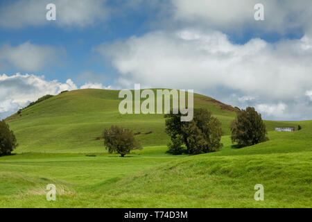 Pasture land of a cattle ranch on Kohala Mountain with an old metal water tank and a cinder cone with trees - Stock Photo