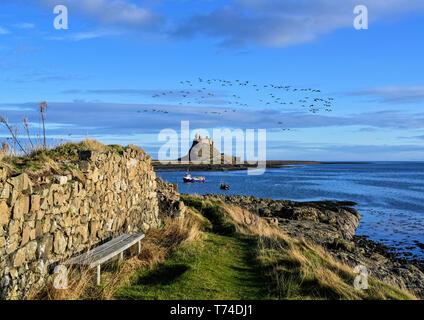 Flock of geese flying over Lindisfarne Castle on Holy Island; Lindisfarne, Northumberland, England - Stock Photo