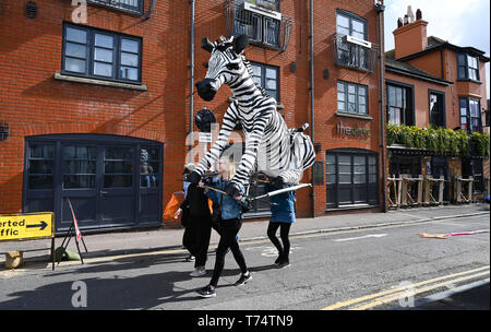 Brighton UK 4th May 2019 - A huge zebra puppet on its way to take part in the annual Brighton Festival Children's Parade through the city which has the theme 'Folk Tales from Around the World' . Organised by the Same Sky arts group the parade traditionally kicks off the 3 week arts festival with this years guest director being the singer songwriter Rokia Traore . Credit : Simon Dack / Alamy Live News - Stock Photo