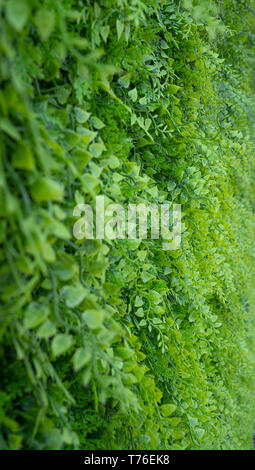 Artificial green fern wall in a shady position - Stock Photo