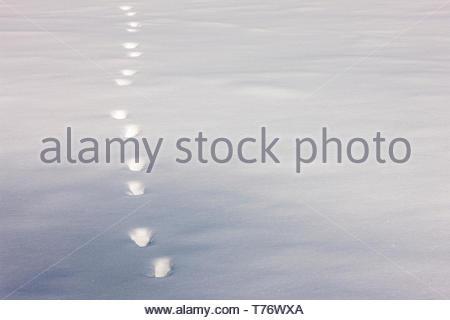Animal tracks through the snow at Harrington Beach State Park, Belgium, Wisconsin - Stock Photo