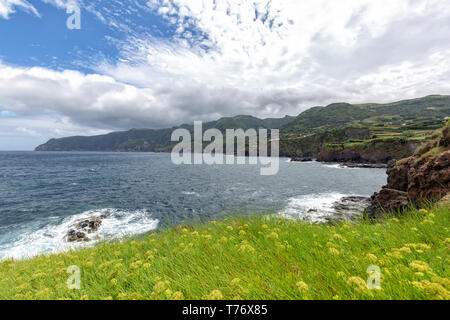 Yellow flowers blooming on the coastline on the outskirts of Ponta Delgada on the island of Flores in the Azores. - Stock Photo