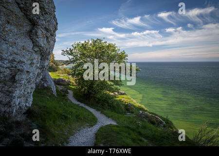 Path along the limestone cliffs above the crystal clear water of the baltic sea on the west coast of Gotland, Sweden. - Stock Photo