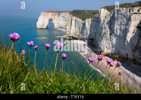 France, Normandy: flowers and rock arc of beach Etretat - Stock Photo