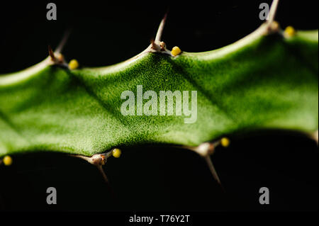 Abstract close up image of a cactus covered with rich details in a fine art macro image with a sharp spot and isolation against background - Stock Photo