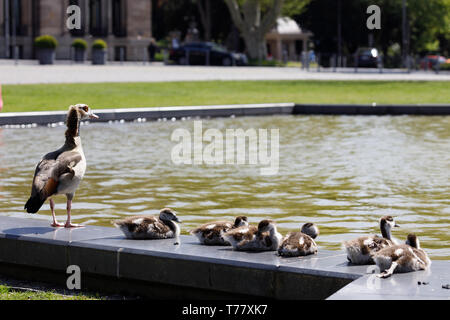 Animals in Hangerweiher Aachen and Wiesbaden - Stock Photo