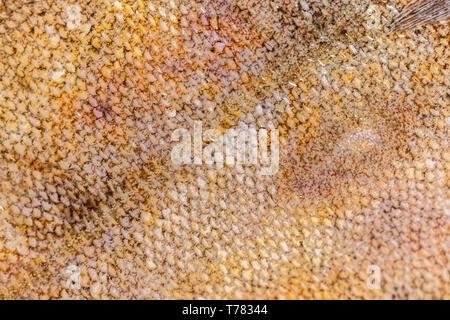 food background, flounder fish scales texture closeup - Stock Photo