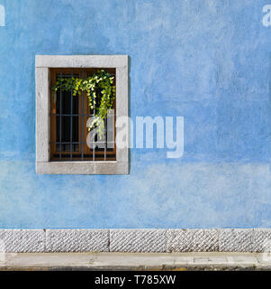 Exterior wall of a historic building painted in blue, with a window decorated with vines - Stock Photo