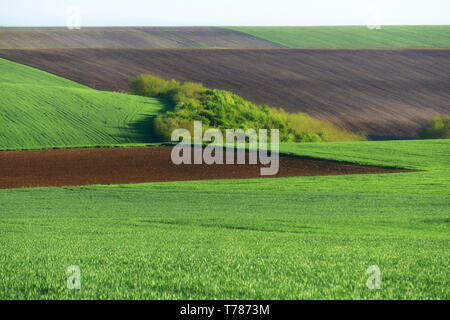 Green wheat fields. Agricultural land. Treated spacious field in the plane. Ploughing time. - Stock Photo