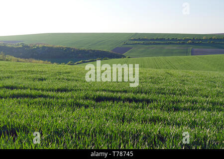 Green wheat fields. Agricultural land. Treated spacious field in the plane. - Stock Photo
