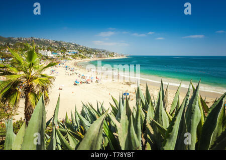 Main beach of Laguna Beach, Orange County, California. Aloe on the foreground is out of focus - Stock Photo