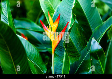 The National Orchid Garden, The Singapore Botanic Gardens, Singapore, South East Asia - Stock Photo
