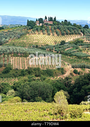 Tuscany countryside planted with olive trees, vineyards, cypresses. Italy. - Stock Photo