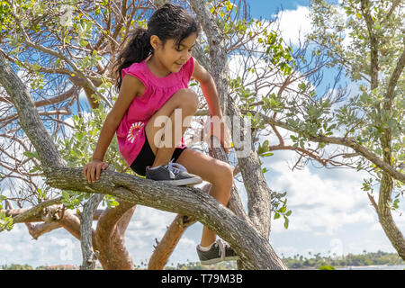 A young schoolgirl enjoys being high up in the trees. On a beautiful sunny day at the park with small trees, an adventurous girl makes her way up. - Stock Photo