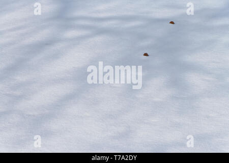 The shadow of tree branches over gum balls on the frozen lake at January-Wabash Park (Ferguson, Missouri) after some snowfall on a winter morning. - Stock Photo
