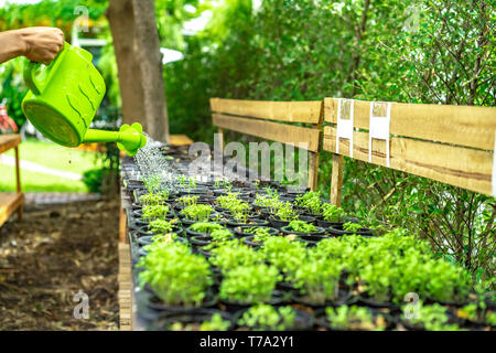 Asian man's hand are watering the sapling in the plastic flowerpot in a row. - Stock Photo