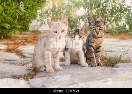 Three curious baby cat kittens, different coat colors shorthair, sitting side by side in a Greek village alleyway, Cyclades, Aegean island, Greece - Stock Photo