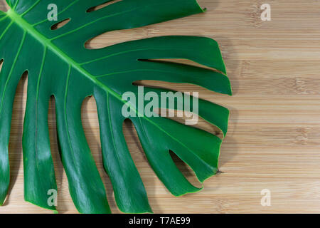 Monstera Deliciosa leaf set on a minimal bamboo wooden background, deep glossy green natural concept - Stock Photo