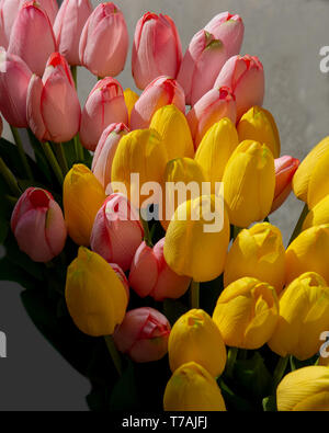 Pink and yellow plastic tulips happy festive flowers background and copys space ideal for spring and Easter celebrations - Stock Photo