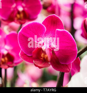 Beautiful orchid flower close-up in florist store square image - Stock Photo