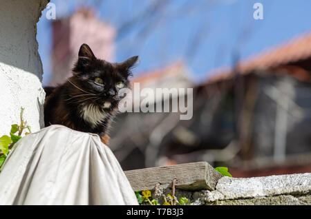Pose of a stray cat on ruined garden wall