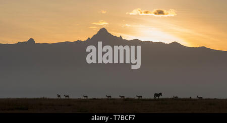 view of Mount Kenya, strong sunrise with backlit clouds, gazelle and a single zebra silhouetted in foreground, wide format, from Laikipia Kenya Africa - Stock Photo