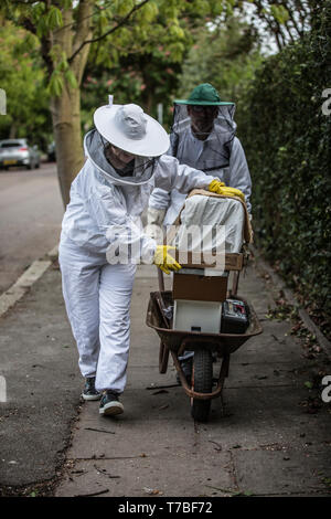 London, UK. 5th May 2019. Beekeepers collect a hive of drone bees in Southwest London, UK Sunday 5th May 2019 A couple dressed in protective beekeeping suites to avoid being stung collect a bee colony and take it away by wheelbarrow on a residential area of southwest London after a prime swarm during the swarm season. Normally about 60% of worker bees leave the original hive location with the old queen and set up a new home, on this occassion in a residential garden. Credit: Jeff Gilbert/Alamy Live News - Stock Photo