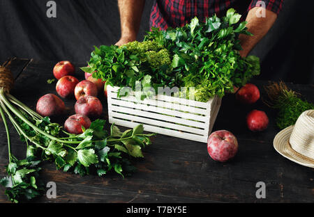 Farmer with freshly picked herbs in wooden box garvesting concept - Stock Photo