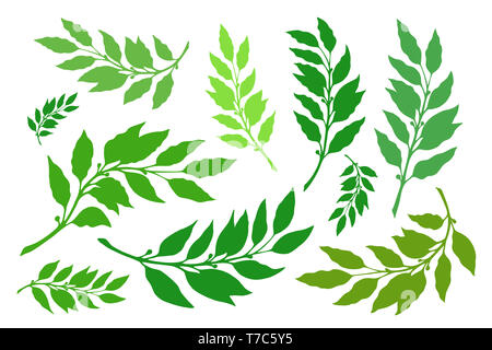 Laurel branches are a set of different versions of shapes and colors. illustration - Stock Photo