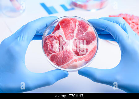 Whole meat sample in laboratory Petri dish. Cultured lab grown meat or meat examination concept. - Stock Photo