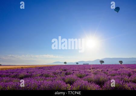 Sunrise over blooming lavender field at Provence France - Stock Photo