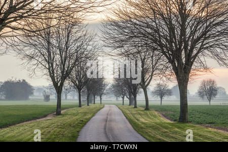 Alley of trees along empty countryside road in United Kingdom - Stock Photo