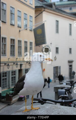 Seagull in the city - Stock Photo