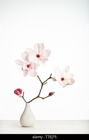Magnolia soulangeana flower on vase isolated on white background - Stock Photo