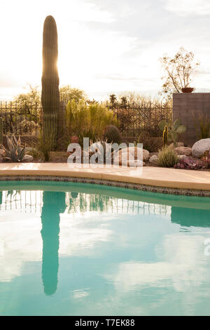 Swimming pool and drought tolerant xeriscape garden with cactus and succulent plants in the American desert Southwest, Tucson, Arizona, United States - Stock Photo