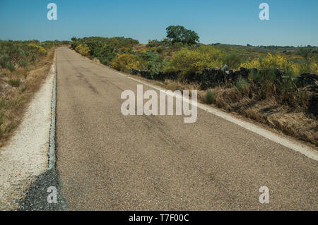 Close-up of straight road through wild landscape of green undergrowth in a sunny day near Castelo Branco. A former bishopric in central Portugal. - Stock Photo