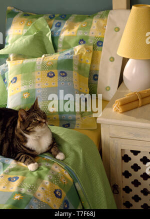 Tabby cat lying on bed with yellow+green cushions - Stock Photo