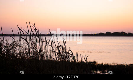 Silhouette of vegetation against a sunset sky. Blurry background of body of water. With copy space. - Stock Photo